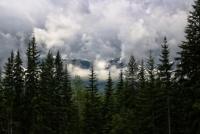 Startup aus der Steiermark hilft bei der Bekämpfung von Waldschädlingen